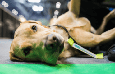 Insomnia65, Guide Dogs, charity